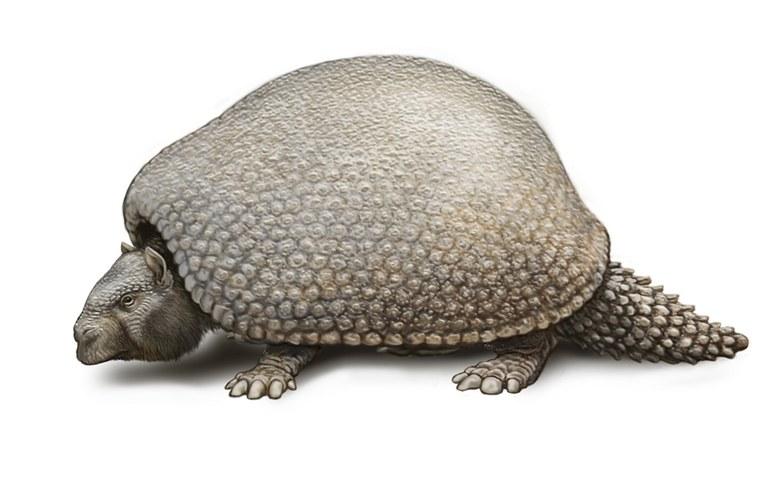 an extinct glyptodonts