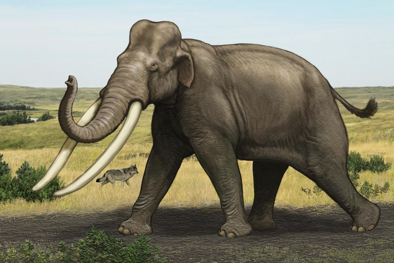 Illustration of a Palaeoloxodon by Carl Buell.