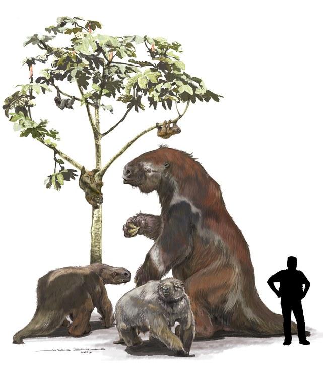 Living and extinct sloths. Image Credit: Jorge Blanco